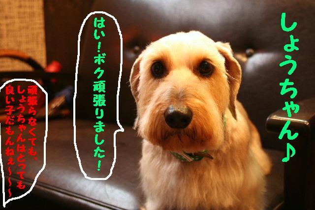 b0130018_20103263.jpg