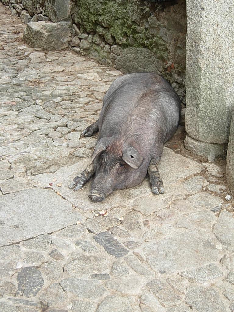 聖アントンの豚_c0213220_450571.jpg