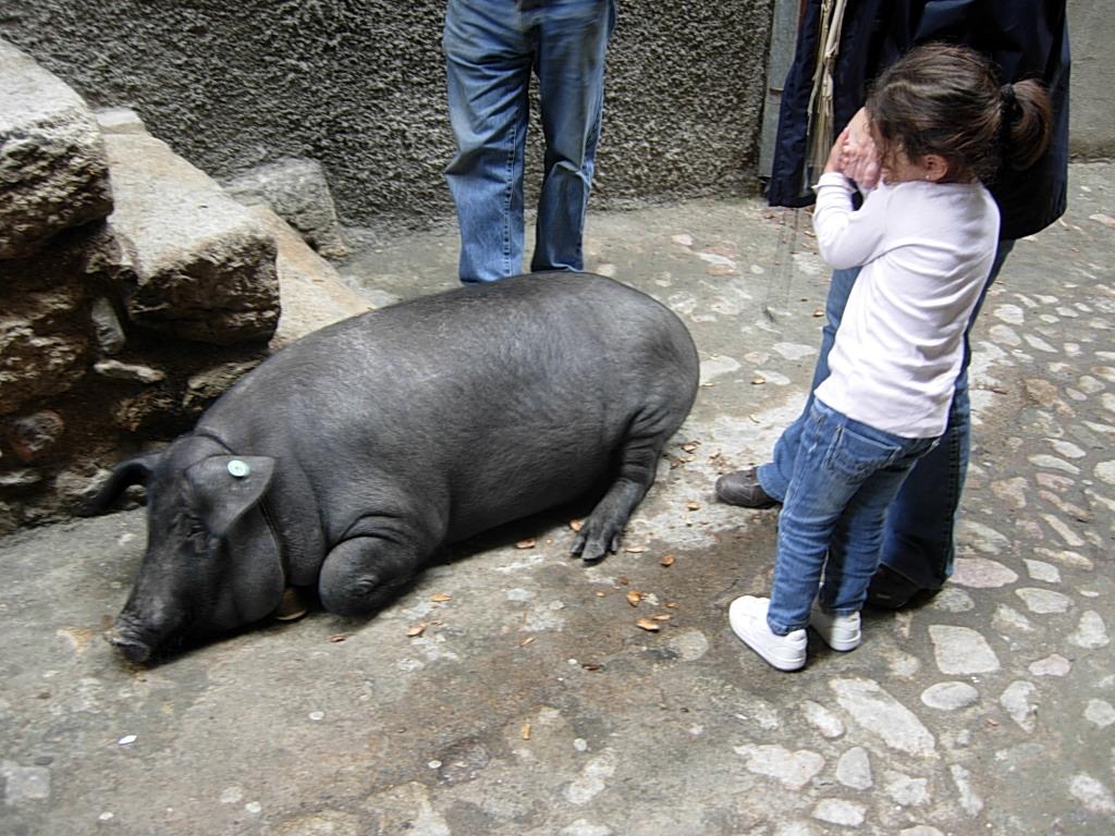 聖アントンの豚_c0213220_459681.jpg