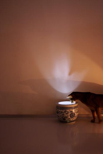 [猫的]LEDの応用_e0090124_7505646.jpg