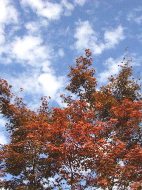 色づく秋_a0111125_1812571.jpg