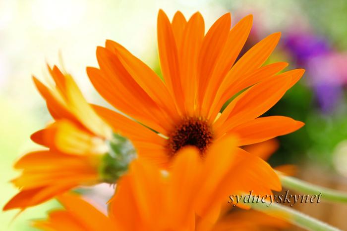 花 乱 舞 09年度版 その4 Orange Yellow_f0084337_20421046.jpg