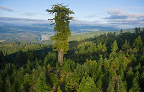 自然を目指すことは、ふるさとに帰ることなのだ_b0160957_1113392.jpg