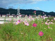 猪名川に沿って_b0102572_1083324.jpg