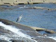 猪名川に沿って_b0102572_954335.jpg