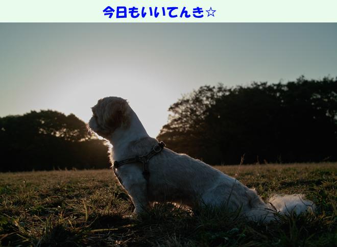 b0188372_8552332.jpg