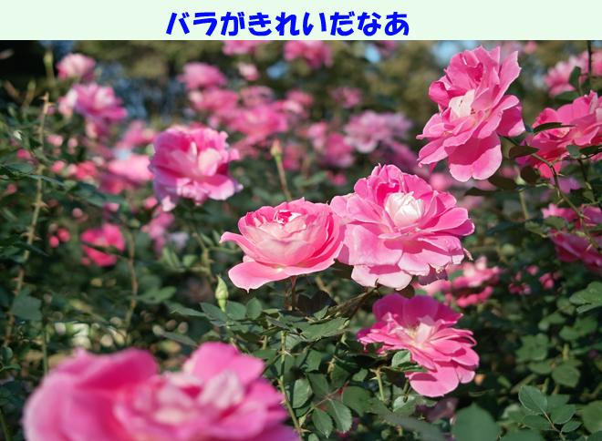 b0188372_856095.jpg