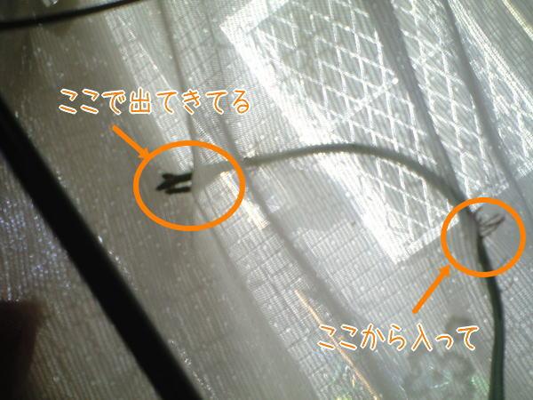 f0187974_0374729.jpg