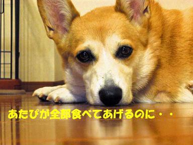 a0132275_14302367.jpg