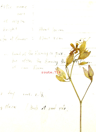 ""\""""The Golden Bough"""" - in the Forest-_f0168398_12432659.jpg""400|553|?|en|2|27f03ab9c234845c3368af62913be9e5|False|UNLIKELY|0.2840820550918579
