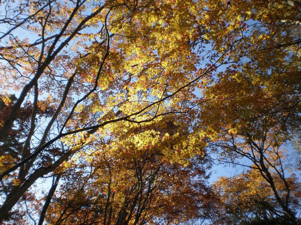 秋の戸隠へ_b0172911_1830313.jpg