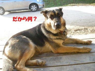 b0113663_8451014.jpg