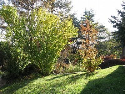 庭全体の印象が変わります_a0129867_1573593.jpg