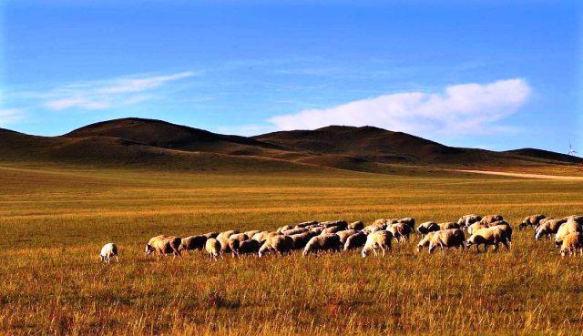 ■モンゴルの草原_e0094583_23321896.jpg