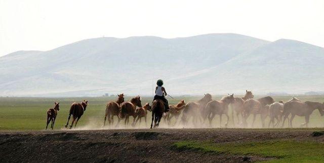 ■モンゴルの草原_e0094583_23335326.jpg
