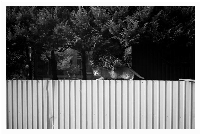 """透明\""""猫""""_c0170584_19571131.jpg"""