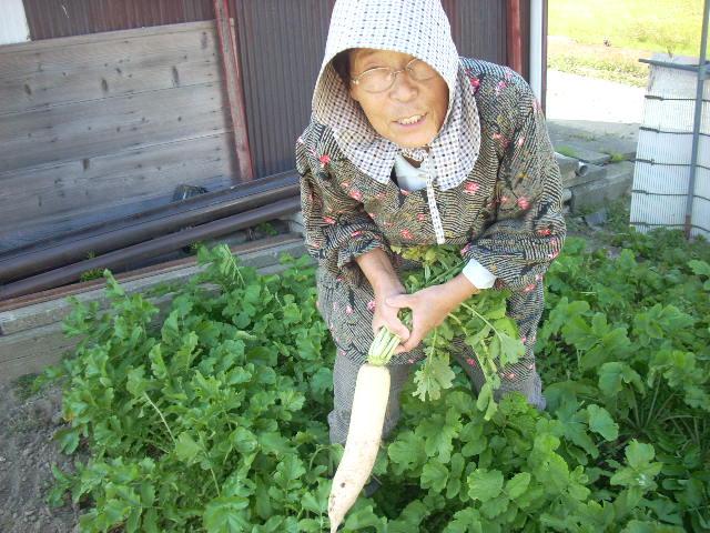 畑の草刈り_a0087789_1912167.jpg
