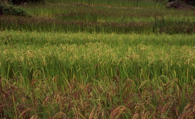 ブータンの農村_c0124100_1724569.jpg