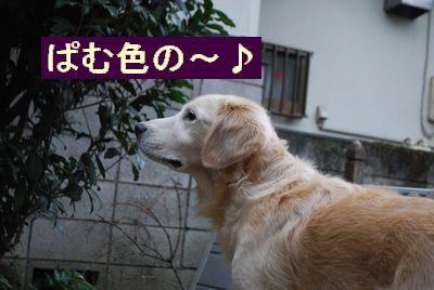 f0109202_11364636.jpg