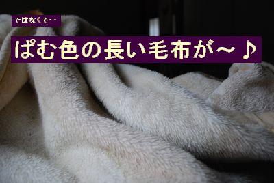 f0109202_1137780.jpg