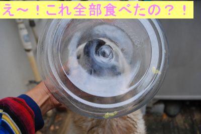 f0109202_1232762.jpg