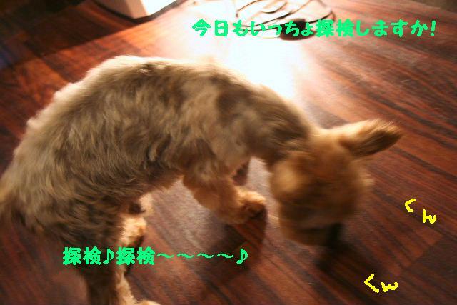 b0130018_2025816.jpg