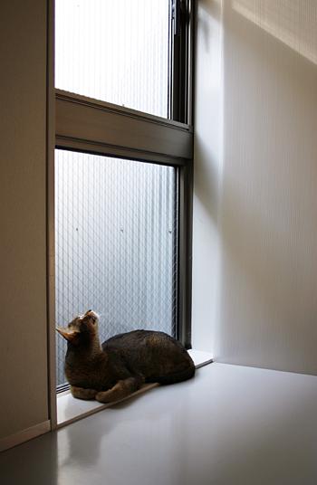 [猫的]蜂の巣_e0090124_1092177.jpg