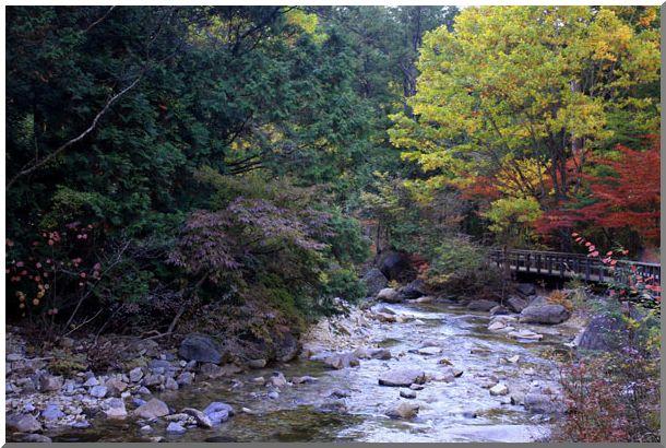赤沢自然休養林・紅葉_d0123528_1610324.jpg
