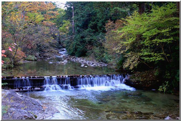 赤沢自然休養林・紅葉_d0123528_1619293.jpg