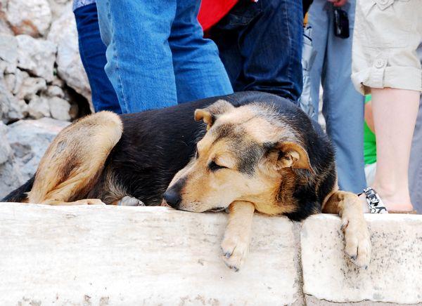 ギリシャにて_e0098241_2045349.jpg