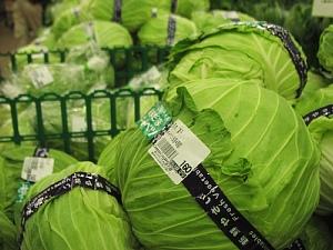 冬野菜の出荷がはじまっています。_c0141652_17143338.jpg