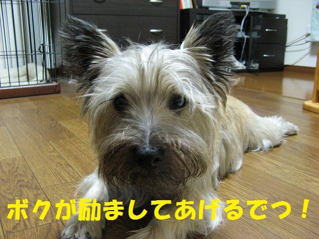 c0202659_22304817.jpg