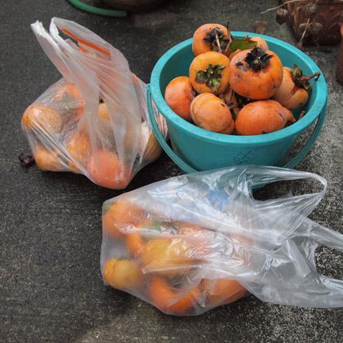 柿食えば。_d0068664_22134988.jpg
