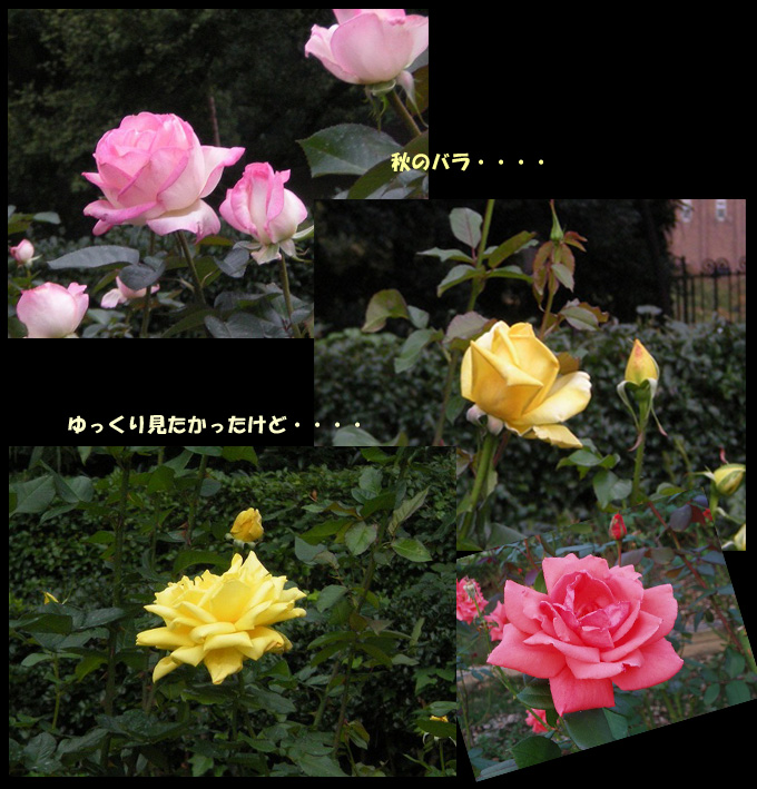 e0003465_1992141.jpg