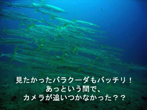 綺麗!!旬なピピ島♪_f0144385_23502435.jpg