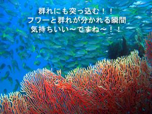 綺麗!!旬なピピ島♪_f0144385_23523549.jpg