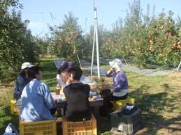 槙林農園 りんごの葉摘み_e0187897_10245326.jpg