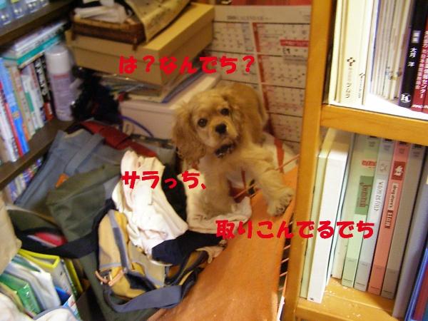b0067012_19212552.jpg