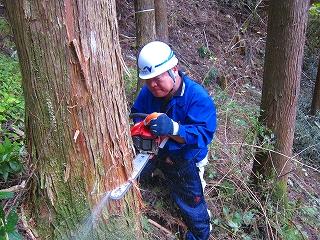 NEXCO協働の森_e0002820_9515034.jpg