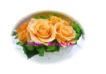 d0151229_2012583.jpg