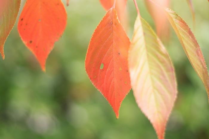 秋色探し・・・♪_b0168041_1755473.jpg