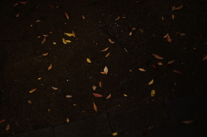 秋色探し・・・♪_b0168041_1756378.jpg