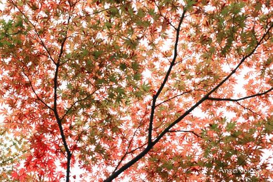 小さな秋をさがしに_d0147742_23442312.jpg