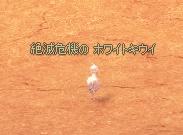 f0191443_137643.jpg