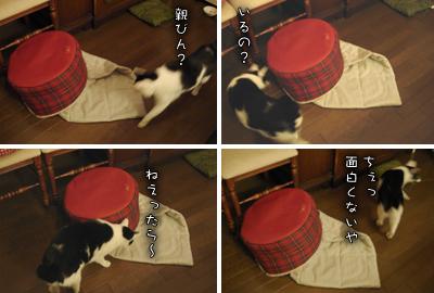 ぷりんのマイブーム復活!_e0031853_22172187.jpg