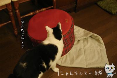ぷりんのマイブーム復活!_e0031853_221727.jpg