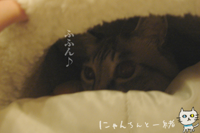 ぷりんのマイブーム復活!_e0031853_22174435.jpg