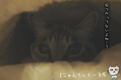 ぷりんのマイブーム復活!_e0031853_2218129.jpg