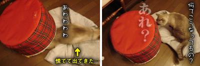 ぷりんのマイブーム復活!_e0031853_22182317.jpg