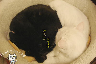 本日の寝床_e0031853_2228230.jpg